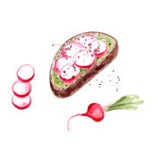 Toast with radish and avocado puree Stock Images