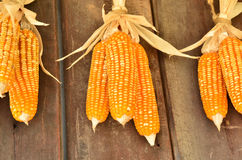 Toast sweet corn with the husks still on Royalty Free Stock Photo