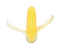 Toast sweet corn with the husks still on, isolated on white Stock Photography