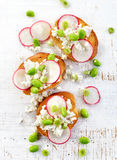 Toasted bread with cottage cheese and radish Stock Images