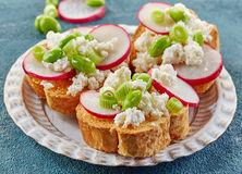 Toasted bread with radish and cottage cheese Stock Photos