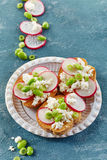 Toasted bread with radish and cottage cheese Royalty Free Stock Photos