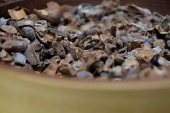 Close up of toasted cacao beans in a bowl. At a chocolate workshop royalty free stock photo