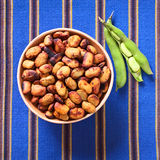 Toasted Fava Beans (Habas in Spanish) Royalty Free Stock Photos