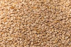 Toasted sesame seeds. Background, macro royalty free stock images