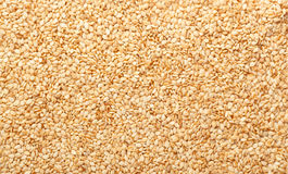 Toasted sesame seeds Stock Images