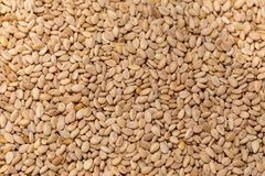 Toasted sesame seeds. Background, macro royalty free stock images