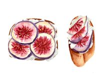 Toasts with figs slices and white cheese or cream. Watercolor hand painting Royalty Free Stock Photos