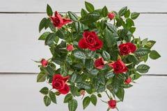 Tob sikt av röda rosor på den vita tabellen royaltyfri fotografi