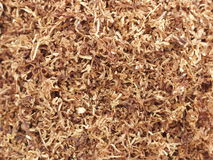 Tobacco.  royalty free stock photography