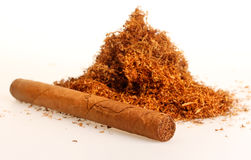 Tobacco. Cuban cigar with pile of tobacco Stock Photos