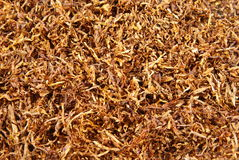 Tobacco. Loose shredded tobacco for background or concept Stock Photo