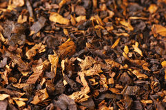 Tobacco as background Royalty Free Stock Images