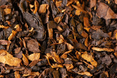 Tobacco as background Stock Images