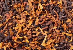 Tobacco background Stock Photography