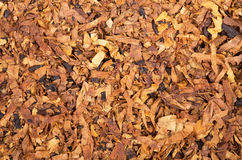 Tobacco background Stock Photos