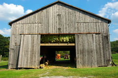 Tobacco Barn. A tobacco barn in Kentucky USA. Tobacco plants hang to dry in the open air barn and the harvesting equipment can be seen through the doorway stock images