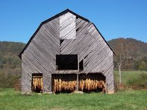 Tobacco Barn. Tobacco hanging in an old barn to dry Stock Photo
