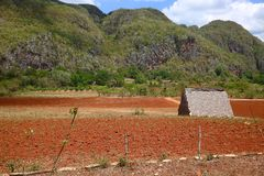Tobacco Barn in Picturesque Cuban Landscape Stock Image