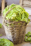 Tobacco in a basket. Tobacco in a bascket with a string on top Stock Image