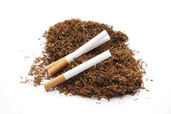 Tobacco with cigarette Royalty Free Stock Image