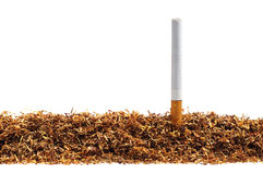 Tobacco and cigarette Stock Photos