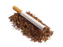Tobacco and cigarette Royalty Free Stock Photo