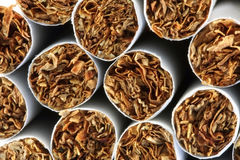 Tobacco and cigarettes Royalty Free Stock Image