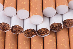 Tobacco in cigarettes Stock Images