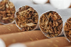 Tobacco in cigarettes with brown filter. Close up Stock Images