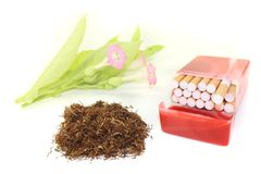 Tobacco with cigarettes case and blossoms Royalty Free Stock Images