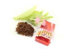 Tobacco with cigarettes case Royalty Free Stock Images