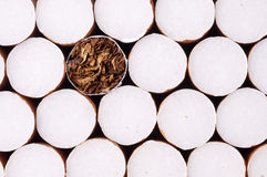 Tobacco in cigarettes. Close up Stock Image