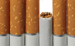 Tobacco in cigarettes close up. Tobacco in cigarettes with a brown filter close up Stock Image