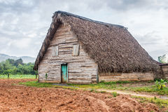 Tobacco curing barn in Pinar del Rio, Cuba Royalty Free Stock Images