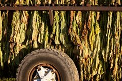 Tobacco Drying Royalty Free Stock Images