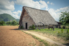 The tobacco farm Stock Photography