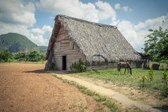 The tobacco farm. Tobacco farm in Cuba Stock Photography