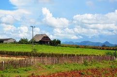 Tobacco farm in Puerto Esperanza, Cuba Royalty Free Stock Photography