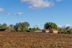 Tobacco farm Royalty Free Stock Image