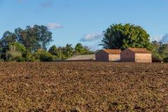 Tobacco farm Stock Photography
