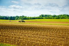Tobacco field in spring. Freshly planted tobacco sprouts in the field in Central Kentucky stock image