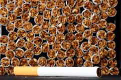 Tobacco Industry Royalty Free Stock Photography