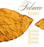 Tobacco leaf. Isolated tobacco leaves on a white background Stock Photography