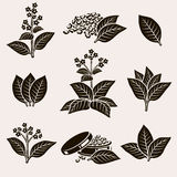 Tobacco leaf set. Vector Stock Photo