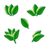 Tobacco leaf set. Vector Royalty Free Stock Photos