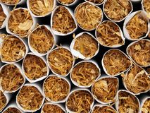Tobacco. Macro front view of tobacco inside of cigarettes Royalty Free Stock Images