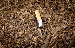 Tobacco Pile Cigarette Royalty Free Stock Photos