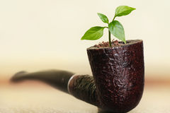 Tobacco Pipes used for Gardening. Stock Image