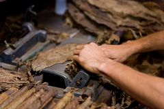 Tobacco production stock image